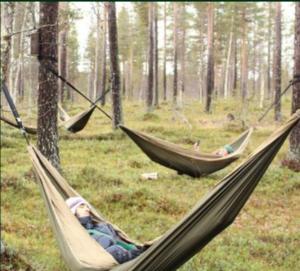 Hamacs forêt nature