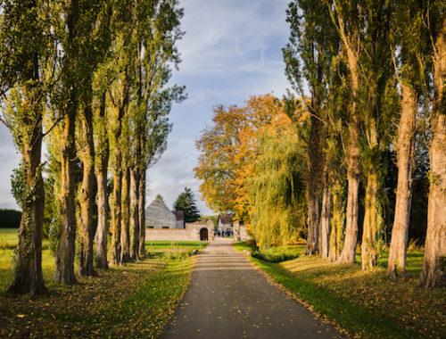 Allée des peupliers en automne de La Thibaudière par Maxence Bernard