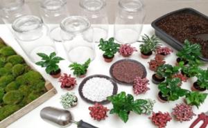 Activité rempotage plante jardinage